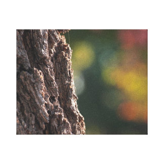 Beautiful Tree Trunk Canvas Stretched Canvas Prints