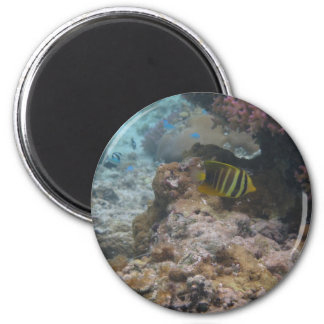 Beautiful Tropical Butterfly Fish Magnets