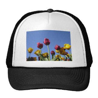 Beautiful Tulips Hats