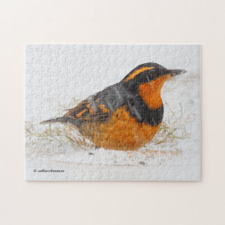 Beautiful Varied Thrush on a Snowy Winter's Day Jigsaw Puzzle