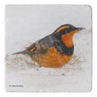 Beautiful Varied Thrush on a Snowy Winter's Day Trivet