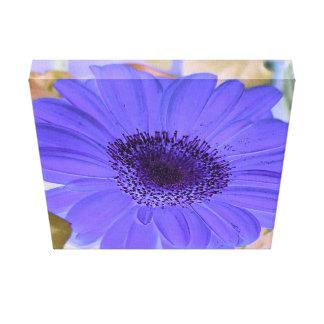 Beautiful Vibrant Purple Lavender Gerber Daisy Canvas Print