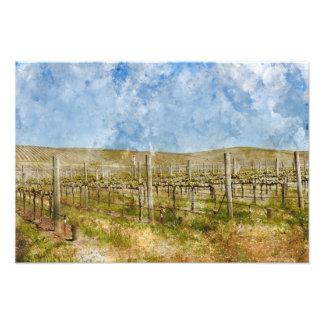 Beautiful Vineyard in Napa Valley Photo Print