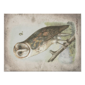 Beautiful Vintage Barn Owl poster. Poster