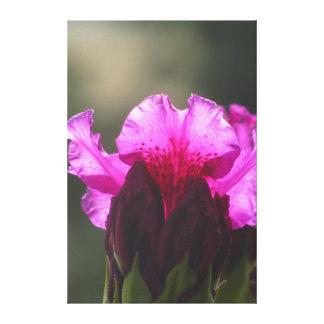 Beautiful Violet Flowers Canvas Print