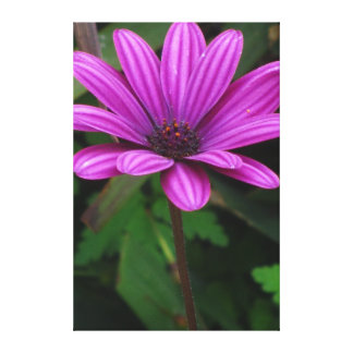 Beautiful Violet Flowers Stretched Canvas Prints