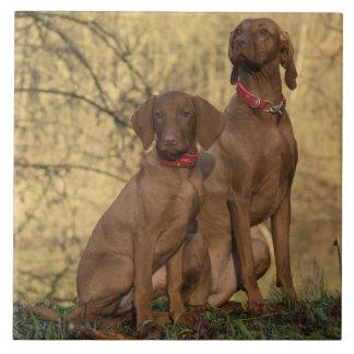 Beautiful Vizsla Sporting Dogs Tile