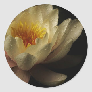 Beautiful Water Lily Stickers