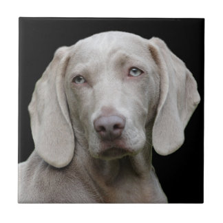 Beautiful Weimaraner Hunting Dog Tile