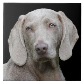 Beautiful Weimaraner Hunting Dog Tile