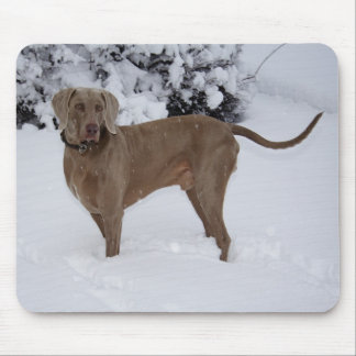 Beautiful Weimaraner in the snow Mouse Pad