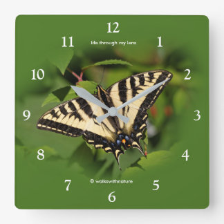 Beautiful Western Tiger Swallowtail Butterfly Square Wall Clock