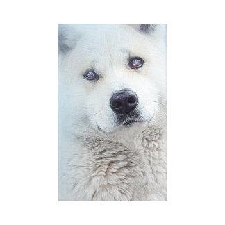 Beautiful White Akita Snow Dog Wolf Canvas Canvas Print