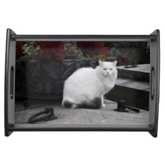 Beautiful White Cat On A Grave Food Trays