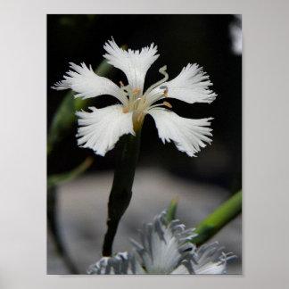 beautiful white flower poster