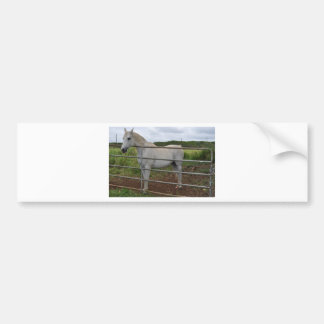 Beautiful white horse photograph bumper stickers