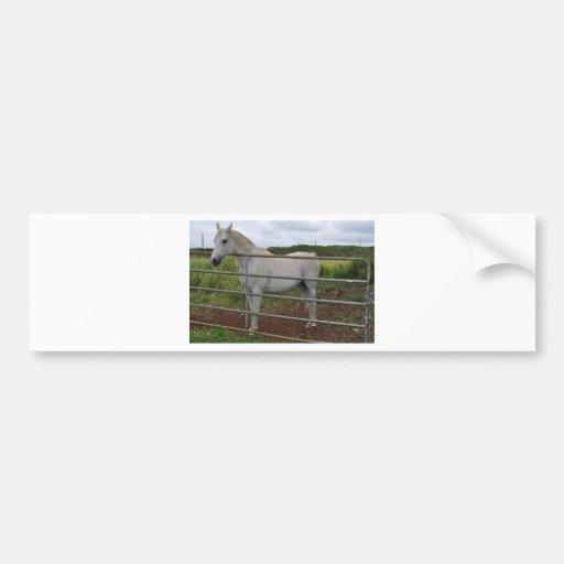 Beautiful white horse photograph bumper stickers