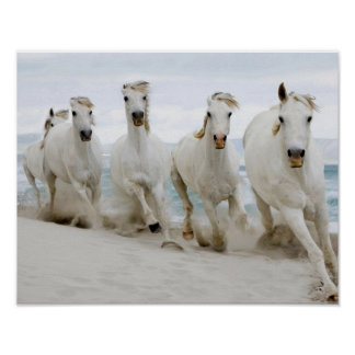 Beautiful-white-horses-running-in-the-sand-of-the- Poster