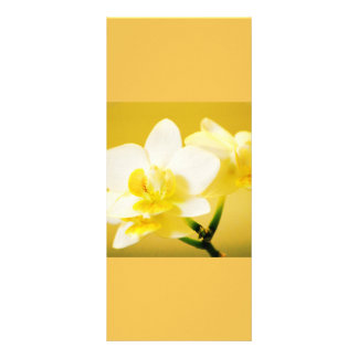 Beautiful white orchid flowers keep calm read on full color rack card