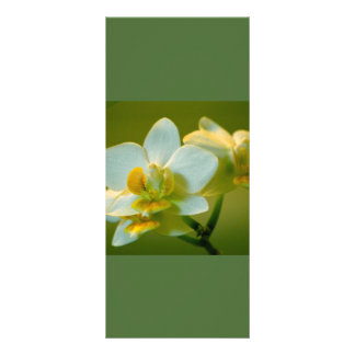 Beautiful white orchid flowers keep calm read on rack cards