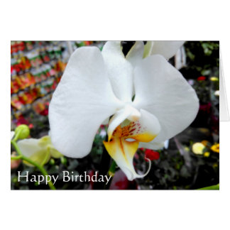 Beautiful White Phalaenopsis Orchid Birthday Card