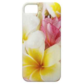 Beautiful White Plumeria Flowers iPhone 5 5S iPhone 5 Covers
