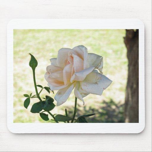 Beautiful white rose flower mousepad