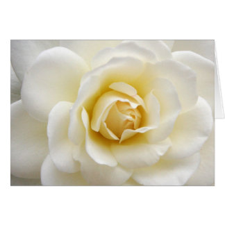 Beautiful White Rose Notecard Note Card