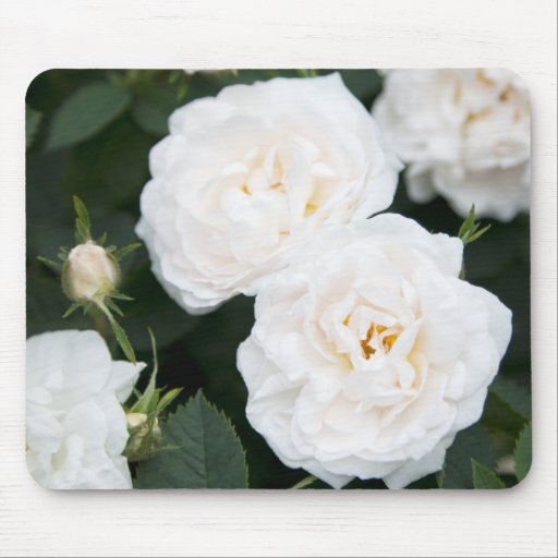 Beautiful white roses and buds with green leaves mouse pads