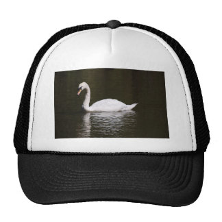 Beautiful White Swan Swimming In Lake Water Hats