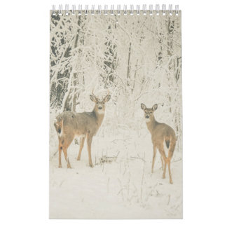 Beautiful White Tailed Deer Wall Calendars