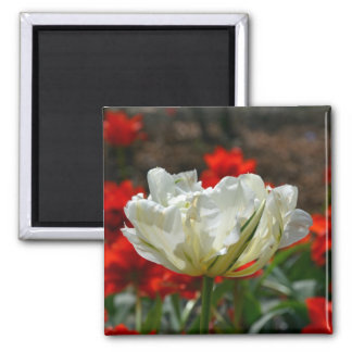 Beautiful white tulip print magnet