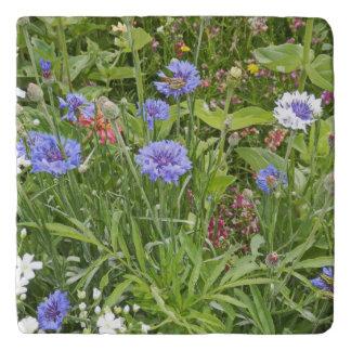 Beautiful wildflowers trivet