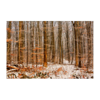 Beautiful Winter Forest with Snow Acrylic Wall Art