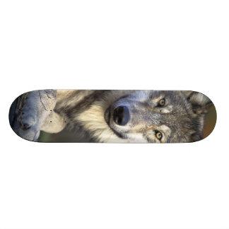 Beautiful Wolf Custom Skate Board