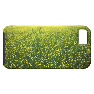 Beautiful yellow flower covered fields of San iPhone 5 Covers