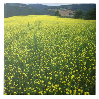 Beautiful yellow flower covered fields of San Large Square Tile