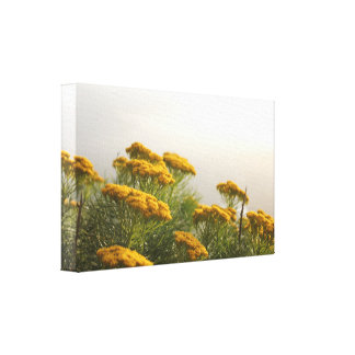 Beautiful Yellow Flowers Stretched Canvas Print