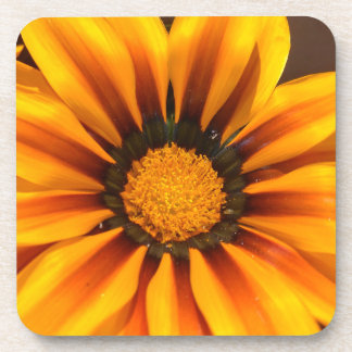 Beautiful Yellow Gazania Coaster