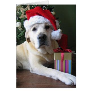 Beautiful Yellow Labrador Santa Card