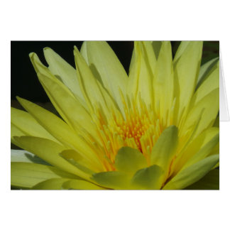 Beautiful Yellow Lily All Occasion Card Frameable Greeting Card