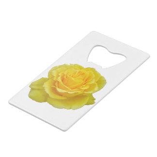 Beautiful Yellow Rose Closeup Isolated