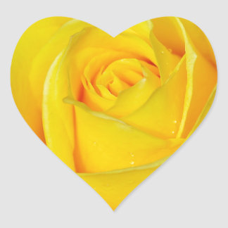 Beautiful yellow rose petals heart sticker