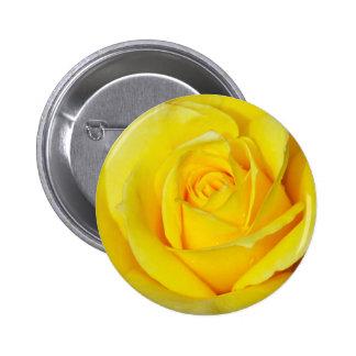 Beautiful yellow rose petals pin