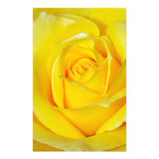 Beautiful yellow rose petals personalised stationery