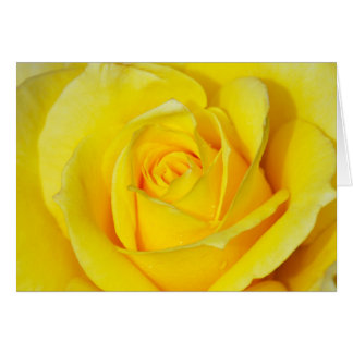 Beautiful yellow rose print greeting card