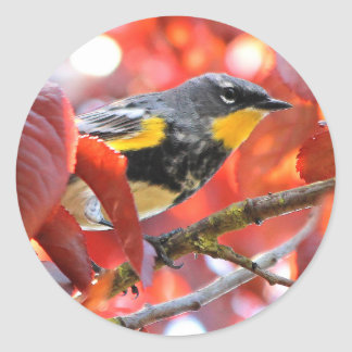 Beautiful Yellow-Rumped Warbler in the Tree Round Sticker