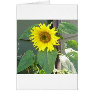 Beautiful Yellow Sunflower Greeting Card