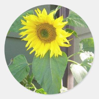 Beautiful Yellow Sunflower Round Sticker