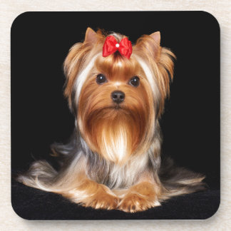 Beautiful Yorkshire Terrier Coaster